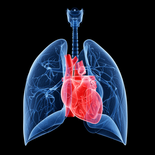 Canadian Study Finds Lung Transplant Survival Rates Good For Persons With Cystic Fibrosis