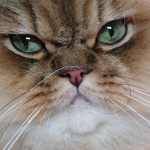 Cats, Not Dogs, May Exacerbate Minor Cystic Fibrosis Symptoms