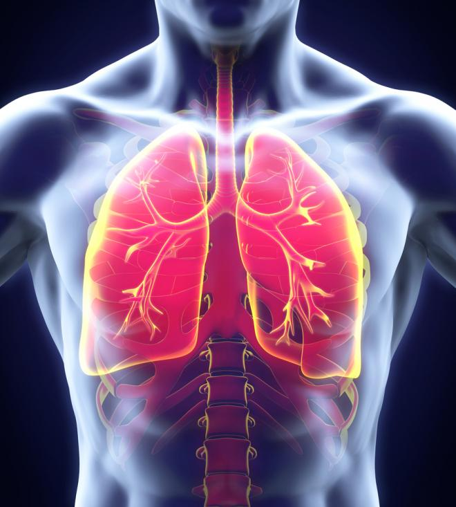 3d Model Of Cf Lung Microbiome May Advance Targeted Drug Delivery