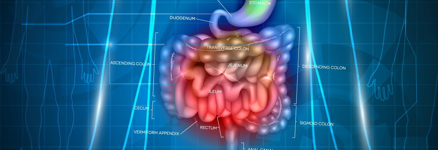 CFTR Abundant in Gut, Possible Reason for Intestinal Problems in CF Patients