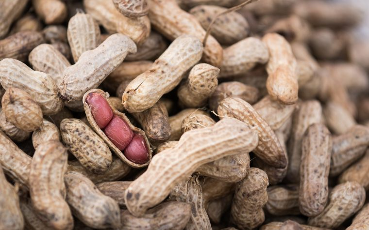 nuts and mold toxins