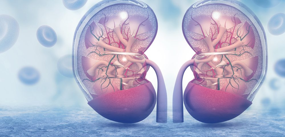 Once-daily Tobramycin Treatment Does Not Harm Kidneys of CF Patients, Study Says
