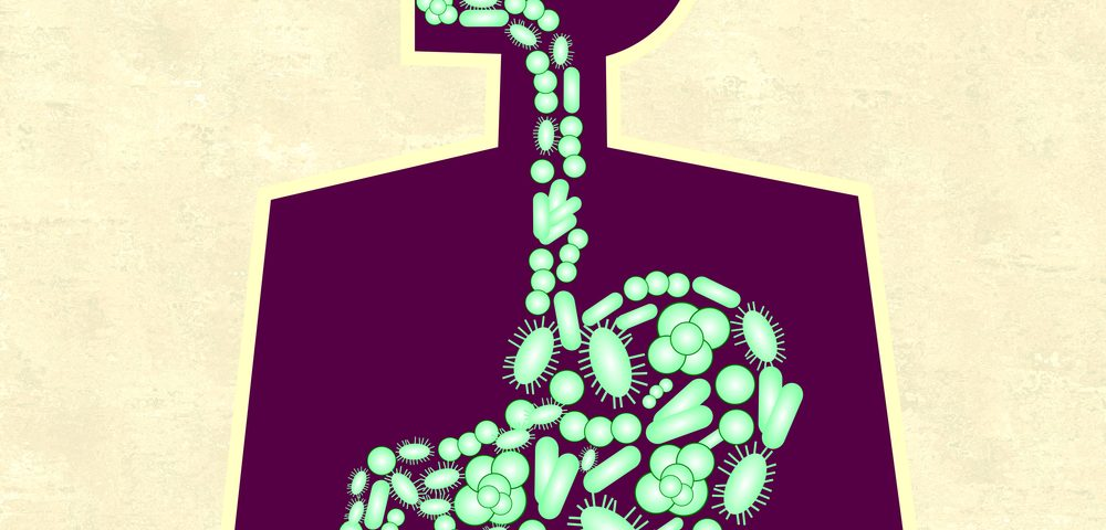 Reduced Diversity in Gut Bacteria Worsens as CF Lung Function Declines, Study Shows
