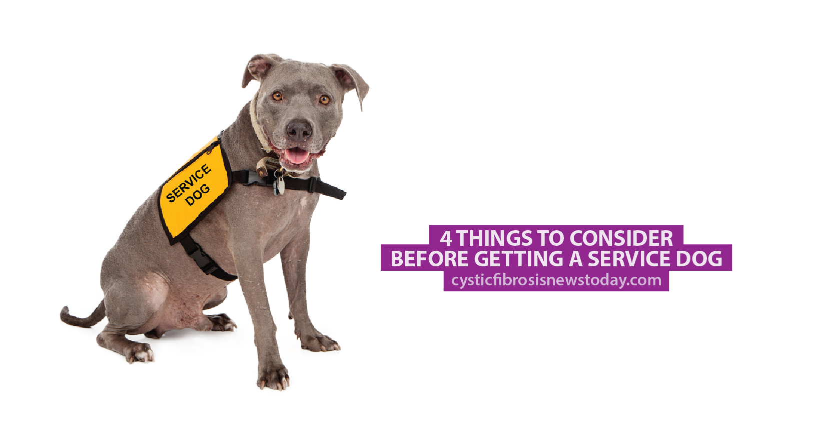 Excellent 4 Things to Consider Before Getting a Service Dog - Cystic  NR91