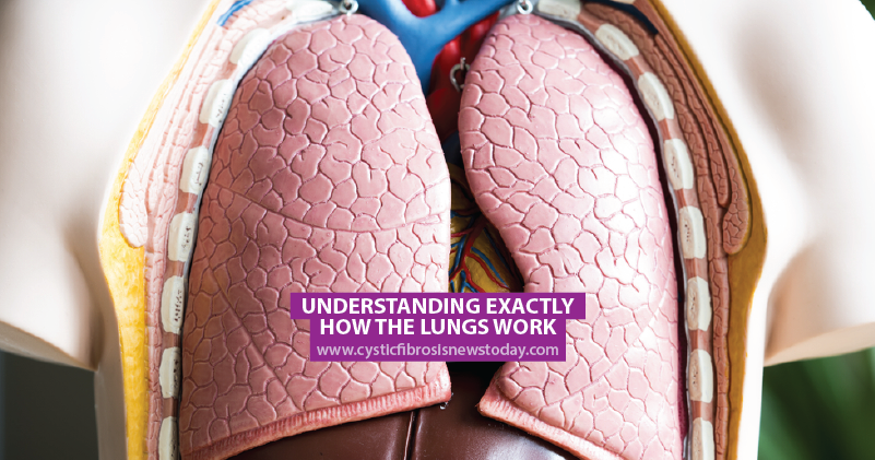 Understanding Exactly How The Lungs Work Cystic Fibrosis News Today