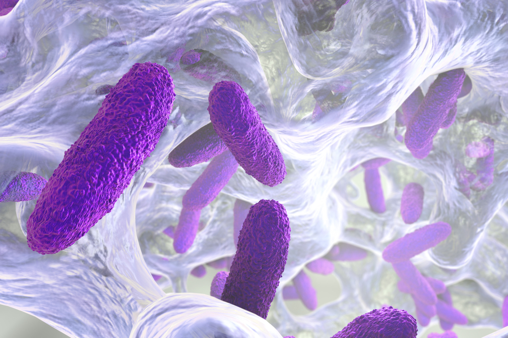 CF lung bacteria discovery