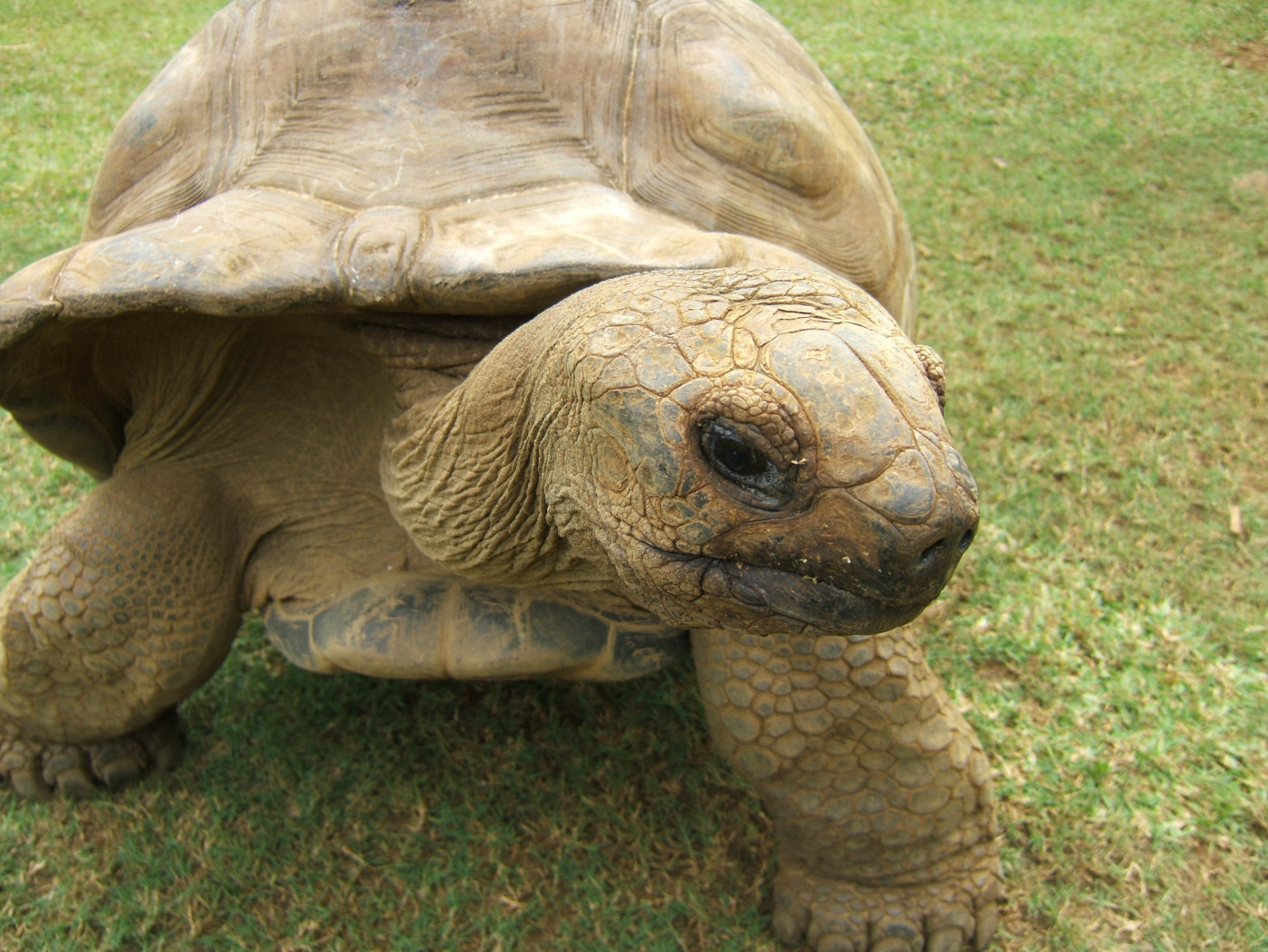 slowing down, tortoise-style