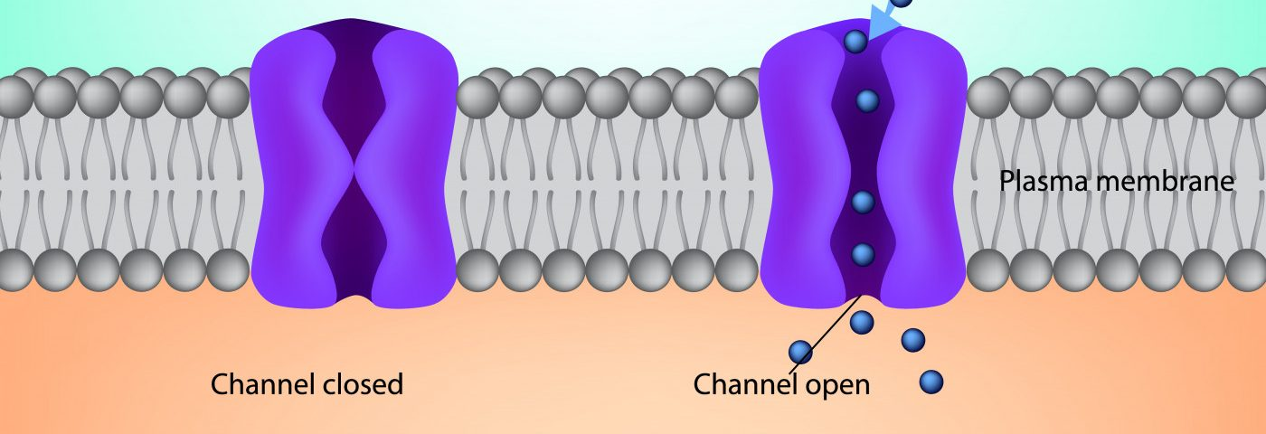 Structure of Membrane Protein That May Allow for Flow of Chloride in Cells Revealed in Study
