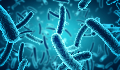 Data Promising on Nitric Oxide as Treatment Against Mycobacterium abscessus, AIT Reports