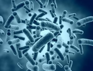 bacteria and infections