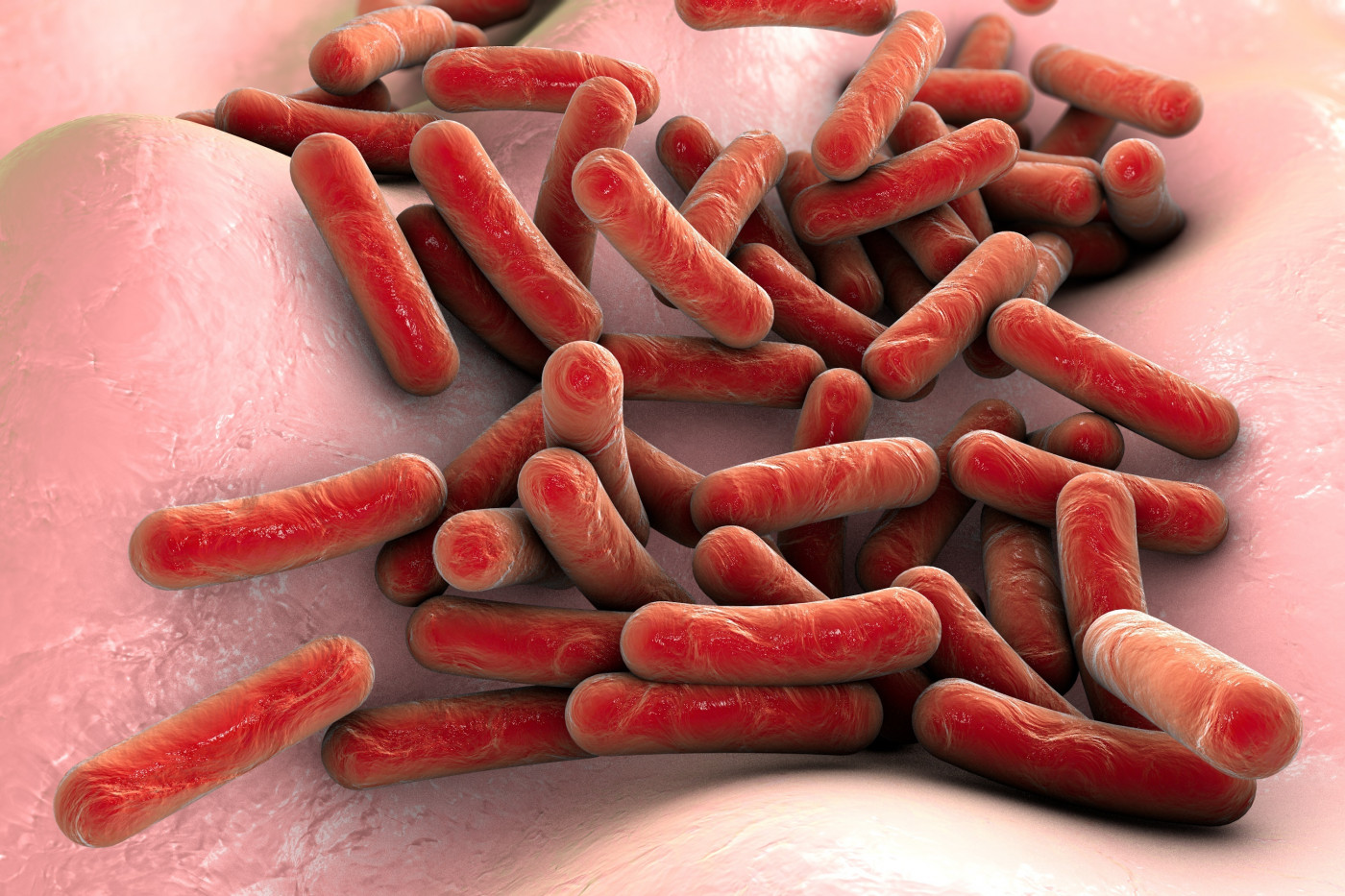 Kalydeco and gut bacteria