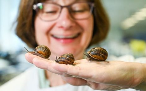 Snail Slime May Lead to New CF Treatments Because of Its Antimicrobial Proteins