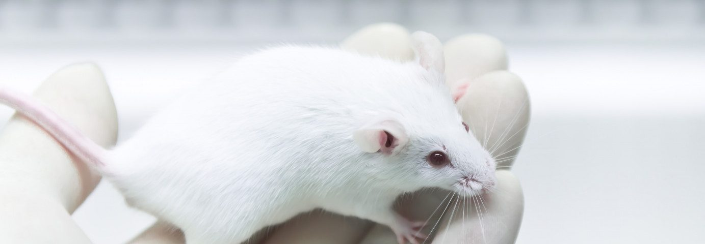 Mouse Study Finds Genetic Identity of Embryonic Lung Progenitor Cells