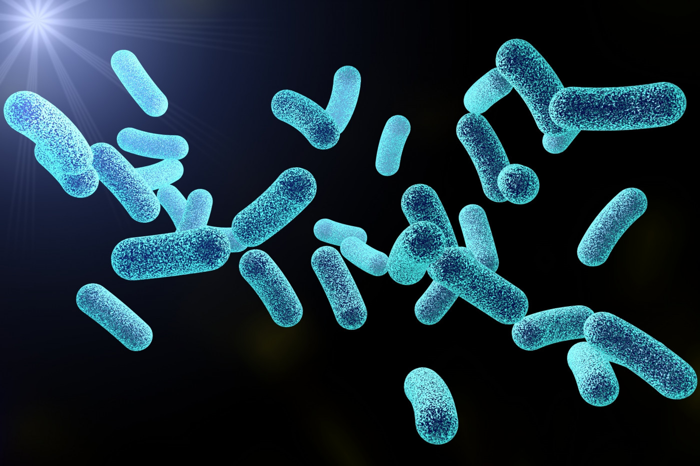 bacteria and biofilms