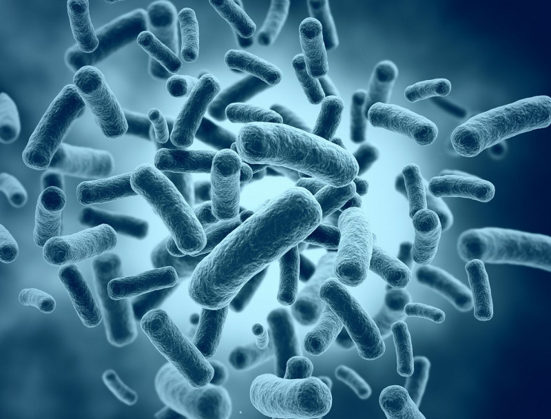 MRSA in CF lung infections   Cystic Fibrosis News Today   bacteria